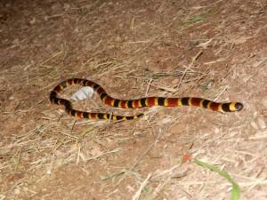 Snake2_WEB